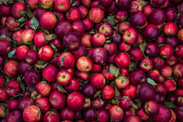 Local Apples available in the Willamette Valley