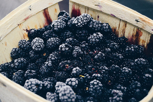 Local Blackberries available in the Willamette Valley