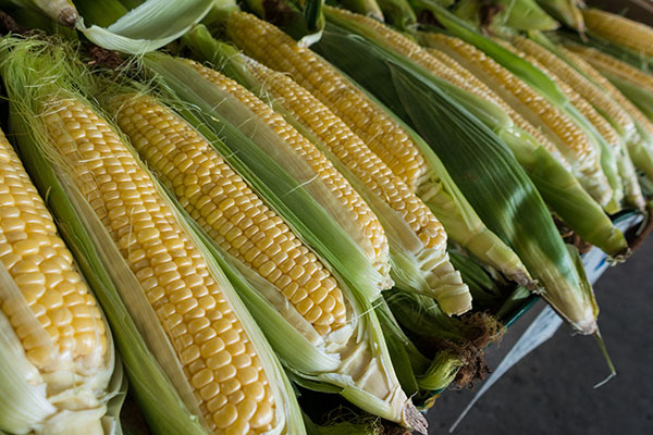 Local Corn available in the Willamette Valley