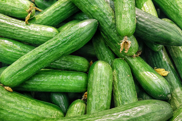 Local Cucumbers available in the Willamette Valley