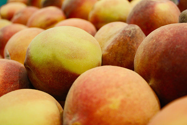 Local Peaches available in the Willamette Valley