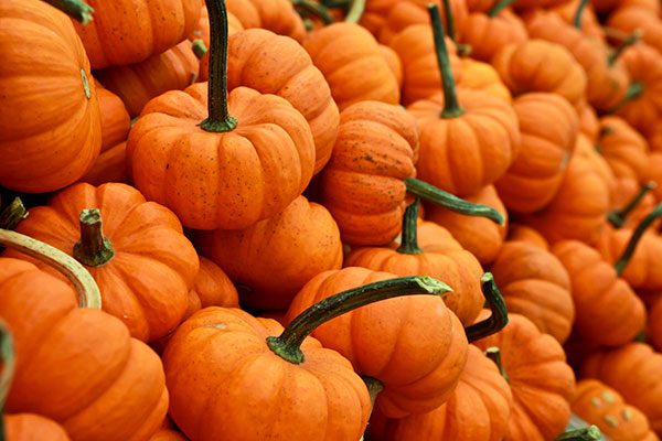 Local Pumpkins available in the Willamette Valley