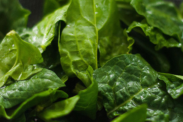 Local Spinach available in the Willamette Valley