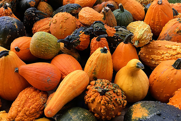 Local Squash available in the Willamette Valley