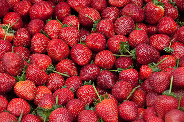 Local Strawberries available in the Willamette Valley